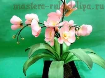 поделки из фоамирана орхидея