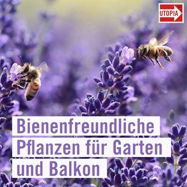 Utopia Auf Instagram Utopia De Bienenfreundliche Pflanzen Pflanzen Garten Pflanzen