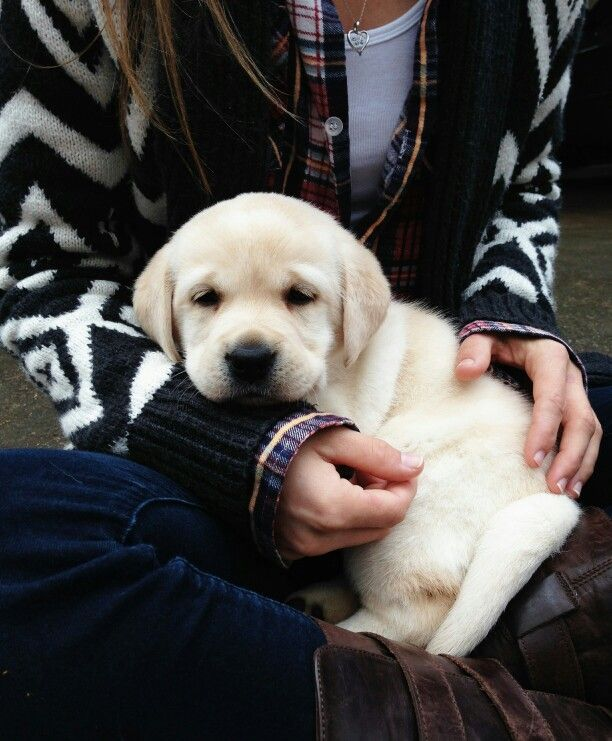 nothing sweeter than a lab puppy <3