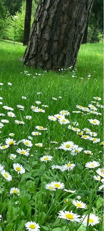 La primavera che esplode con i suoi colori e profumi! #termediboario #terme #relax #fiori #primavera #spring