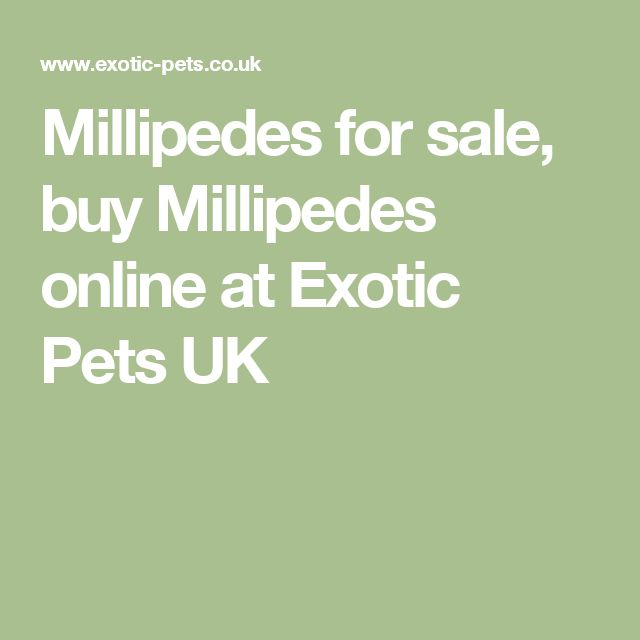 Millipedes for sale, buy Millipedes online at Exotic Pets UK