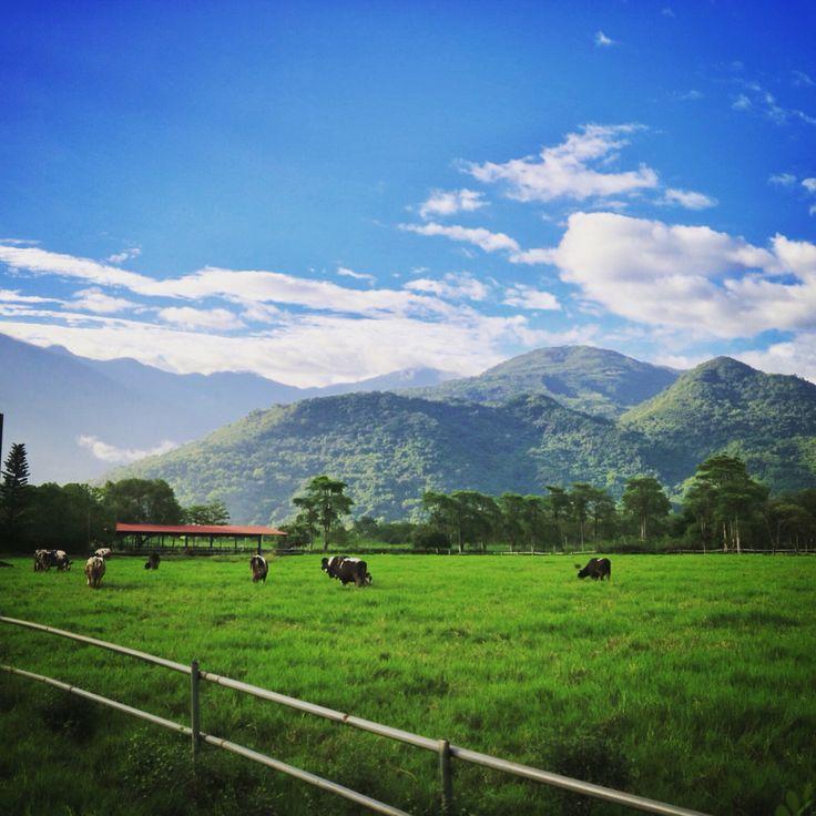 Cow's field.
