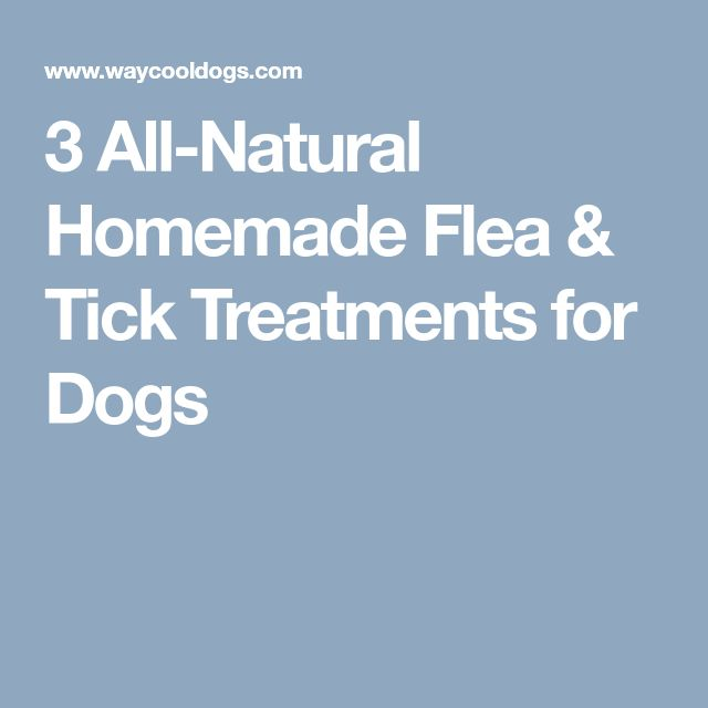 3 All-Natural Homemade Flea & Tick Treatments for Dogs