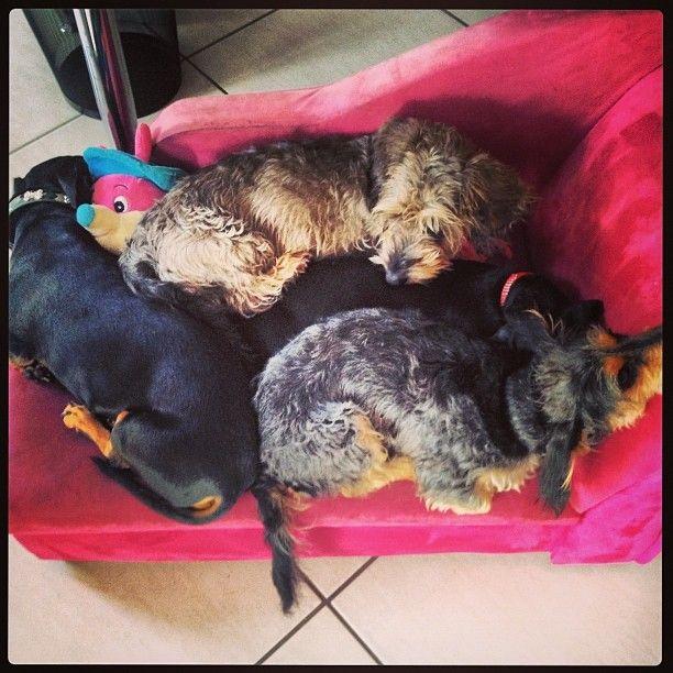 4 Rockstars and a teddy