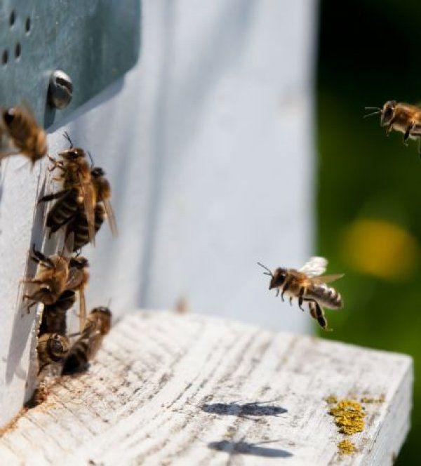 Ένας πανεύκολος τρόπος να απαλλαγείτε από τις μέλισσες