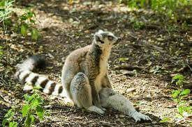 Bush Babies Monkey Sanctuary is a privately owned multi-specie primate rehabilitation centre situated in the foothills and gorges of the Magaliesberg mountain range, close to Hartbeespoort Dam in the North West Province of South Africa.... Welcome to Extreme Frontiers... Our website is http://gerhard53.wixsite.com/extreme-frontiers