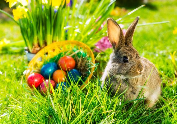 Don't miss an Easter egg hunt with these Savannah family events ...