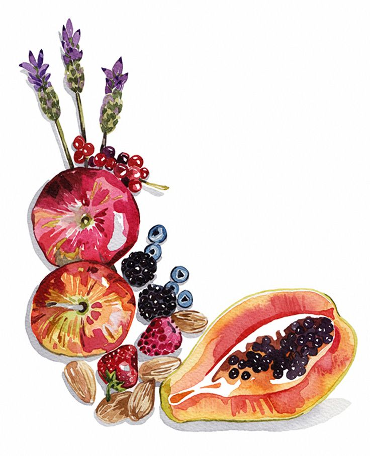 Holly Exley, fruits and nuts and lavender sprigs watercolor painting.