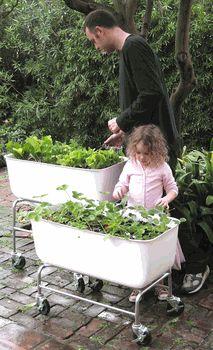 Rolling Patio Planter  .I lovethings on wheelsGardens Ideas, Green, Outdoor, Vegetables Gardens, Herbs Garden, Planters, Food Maps, Rolls Patios, Backyards