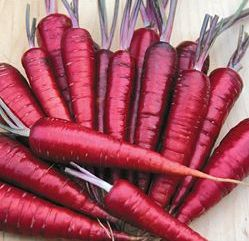 "Heirloom seeds - these are Dragon Carrots, photo via Seed Savers. Heirloom variety fruits and veggies help maintain biodiversity by ""being allowed to pollinate naturally, with traits only selected by generations of breeding. These traits might have been developed quickly [in the last 50 years], or proudly tended and passed from generation to generation since the Civil War."" - Cat Rocketship"
