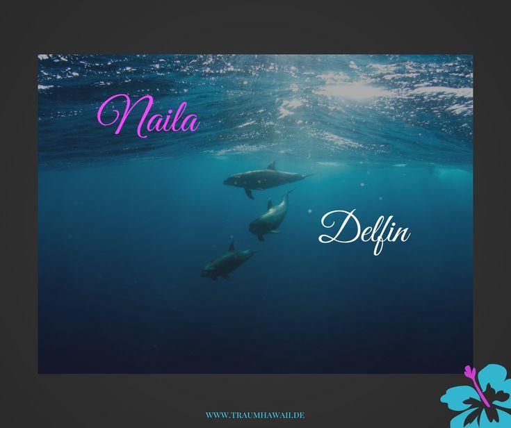 *Learn Hawaiian* Naila bedeutet Delfin Wolltest Du auch schon immer mal wild lebenden Delfinen schwimmen gehen? Auf Hawaii ist das in den Wintermonaten möglich. #traumhawaii www.traumhawaii.de