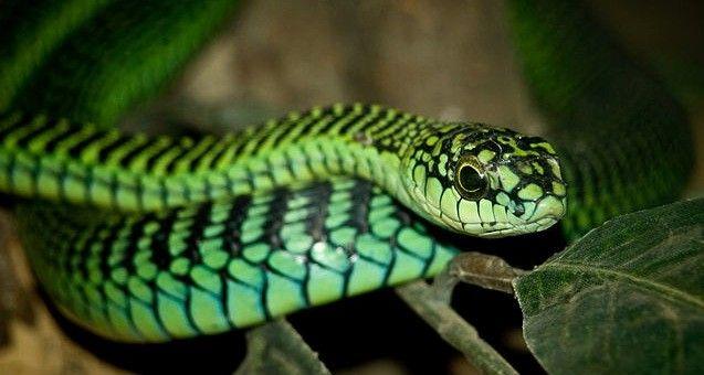 Conoce el caso del científico que prefirió registrar su muerte a ser atendido tras una mordedura de serpiente