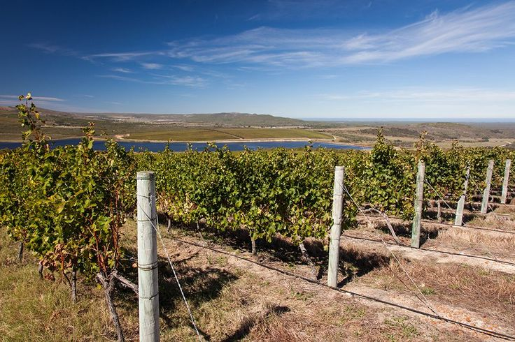 Grootbos Wine Tours Photo Gallery http://www.grootbos.com/en/photo-gallery/wine-tours #Wine #Winelands #SouthAfrica