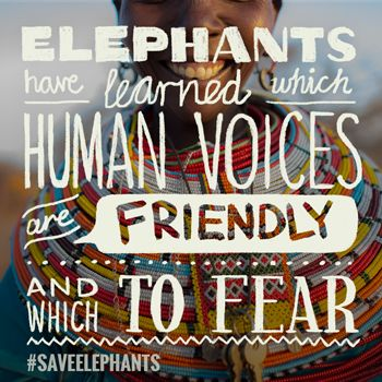 We'll show you what you can do – and we can do together – to keep elephants with us for a long time to come.