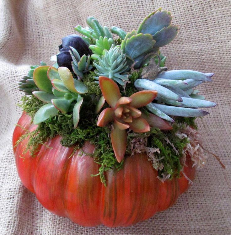 Awesome Autumn Succulent Pumpkin