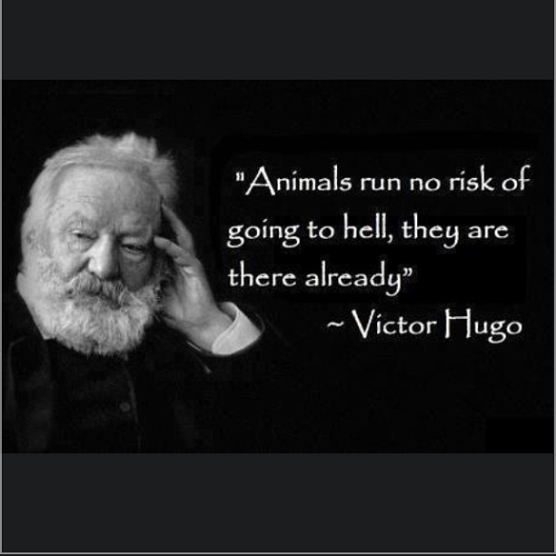 Animal Abuse Quotes By Famous People: Human Life Is The One Chance To Get Out Of The Cycle Of