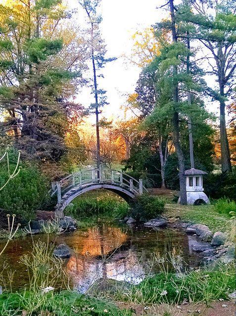Moon Bridge In Japanese Garden At Fabyan Villa Batavia I