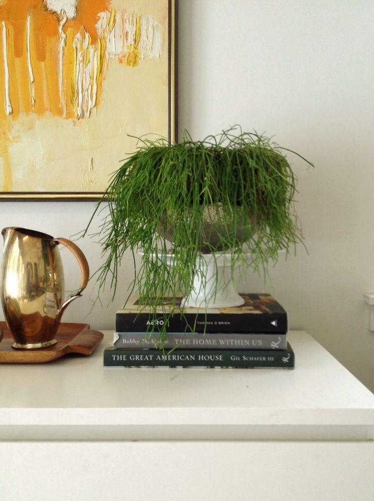 How To Keep Plants Alive if You Have a Black Thumb | Pure Style Home (pictured is a Jim Henson plant)