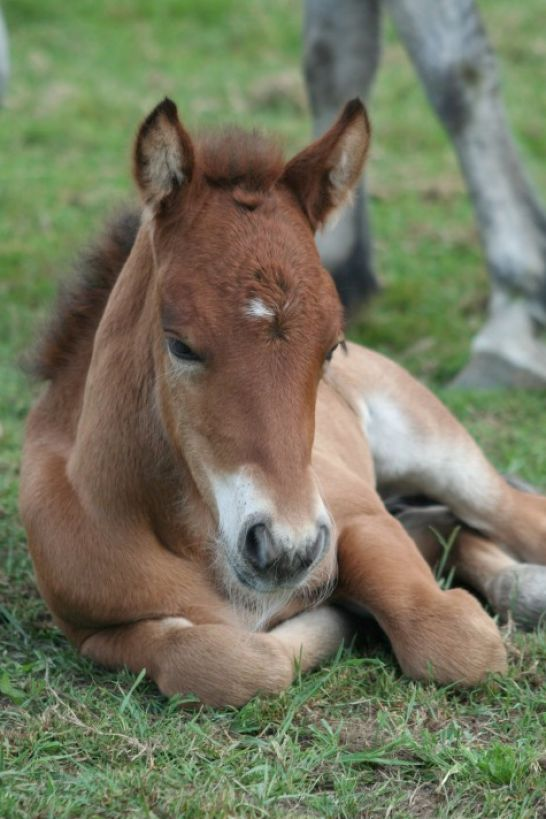 Cute Baby Horses | Pics of cute baby horses pictures 3