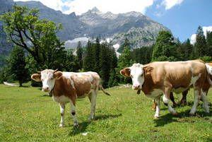 KLEINER AHORNBODEN im Naturpark Karwendel, Tiroler Alpen