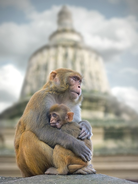 Tender & touching. Anton JankovoyMothers, Macaque, Monkeys, Anton Jankovoy, Anxiety, Into The Wild, Beautiful Creatures, Landscapes Photography, Animal