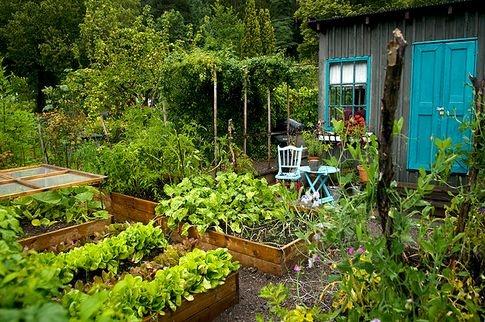 Grönsaksland #grönsakslådor