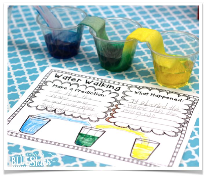 First Grade Science on Water Walk Experiment Freebie And