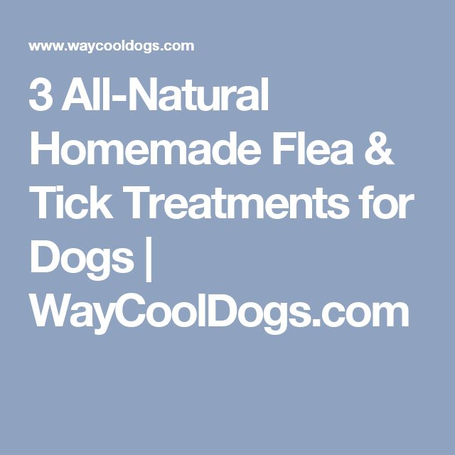3 All-Natural Homemade Flea & Tick Treatments for Dogs | WayCoolDogs.com