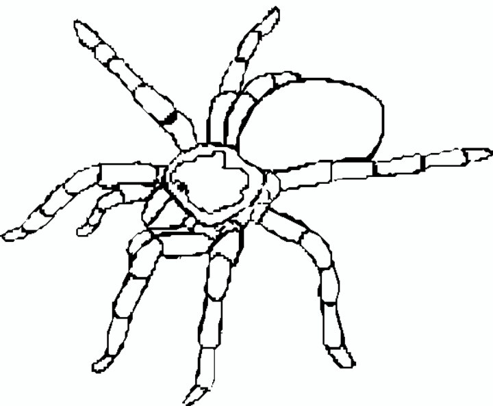 coloring pages tarantula - photo#4
