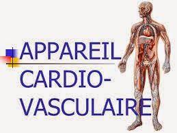 Cours Anatomie de l'appareil cardio-vasculaire