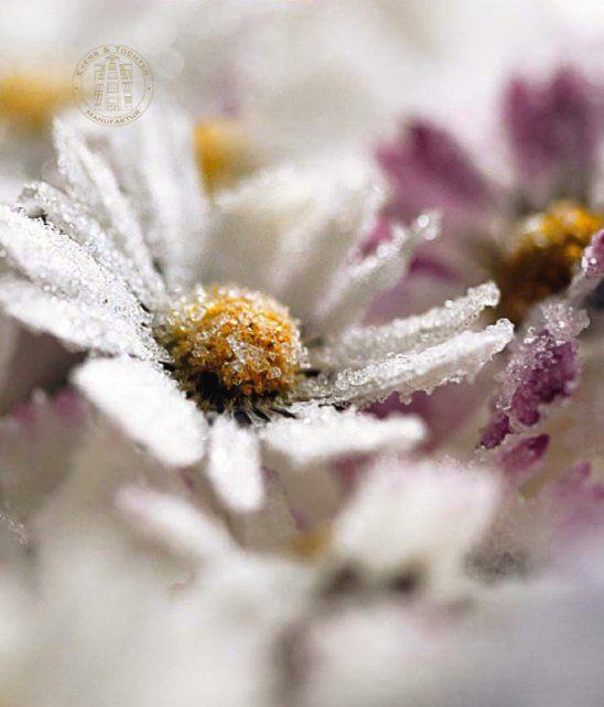 liebelein-will, #Hochzeitsblog, #Gastgeschenk, Hochzeit, kandierte #Blüten, Evers und Tochter #daisies #flowers #sweets #candied #wedding #hochzeit #kandiert #gänseblümchen #eversundtochter