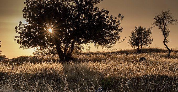 Leaving summer by Natalya Antropova #NatalyaAntropovaFineArtPhotography#ArtDecor#sunset
