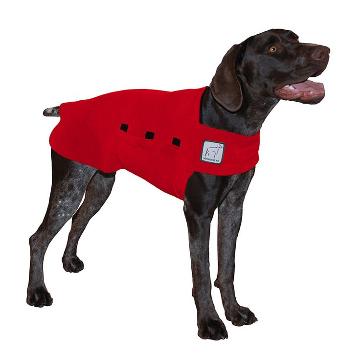 Red German Shorthaired Pointer GSP Dog Tummy Warmer, great for warmth, anxiety and laying with our dog rain coat. High performance material. Made in the USA.