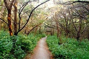 Stretching over 7.9 miles, the Barton Creek Greenbelt is a haven for residents of Austin. People who have lived here for many years have still not discovered all there is hiding in this lush green part of town.