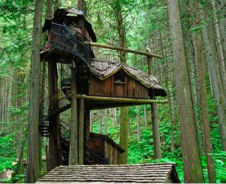 Real Fairytale Houses in Trees - Amazon Treehouses (GALLERY)