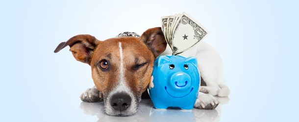 Kosten hond: Wat zijn de kosten van een hond? - Puppies Opvoeden