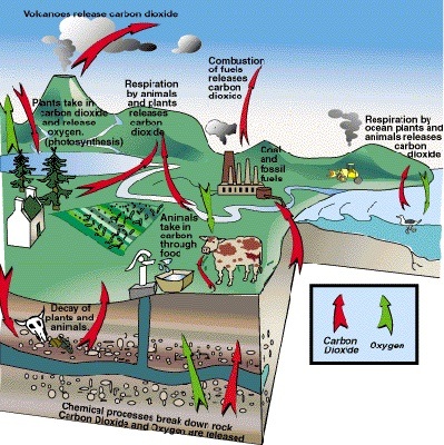 14 best carbon cycle images on pinterest carbon cycle earth carbon cycle illustrated ccuart Image collections