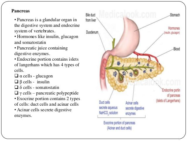 Image Result For Pancreas Somatostatin Pancreas Bile Duct