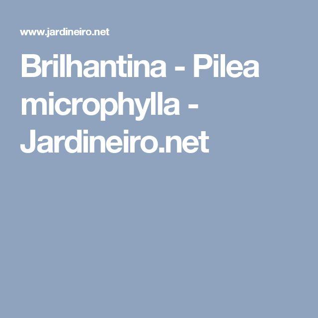 Brilhantina - Pilea microphylla - Jardineiro.net