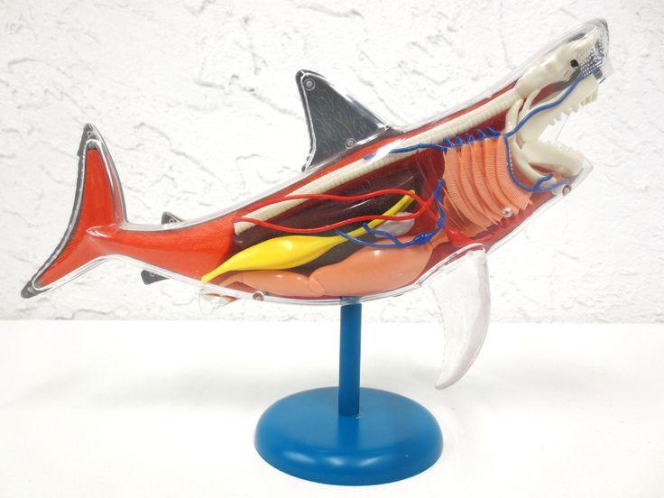 "Anatomic Shark Fish Model 10"" Long, Realistic Transparent See Through Internal Organs, On Stand, Becker & Mayer"