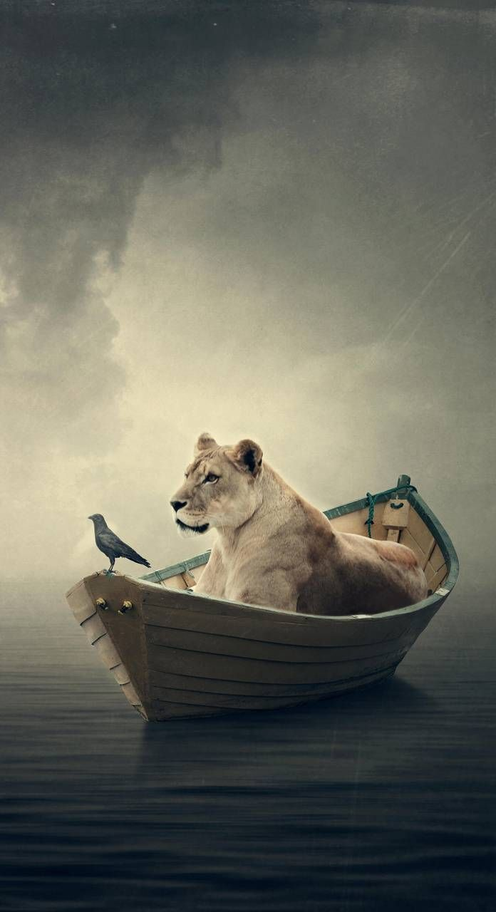 Download Lion Wallpaper By Kurdist4n Dd Free On Zedge Now Browse Millions Of Popular Art Wallpapers And Ringtones On Lion Wallpaper Popular Art Wallpaper