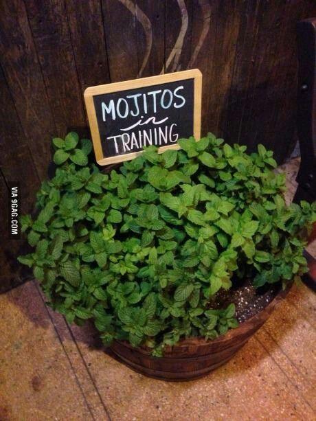 Love mojitos