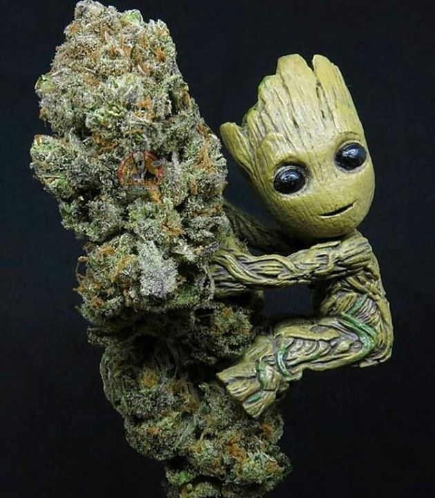 Global cannabis shop is one stop shop Order marijuana online now and have it delivered right at your door steps where ever you are without any problems. You do not necessarily need a Medical Marijuana Card to order marijuana from us. Order weed online |bu