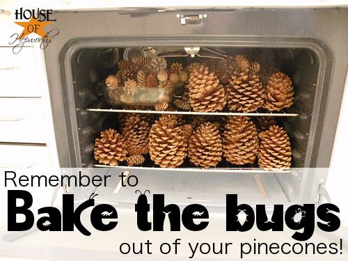 WHY: Many insects munch on developing pinecones; if the cones are brought inside, they will crawl out & become a nuisance in your home. Pinecones may have sap in them still which could make a mess if not dried properly. • HOW: Heat oven to 200°F; place cones on foil-lined baking sheet or casserole dish. Place in oven, making sure to check often so they do not burn. Once they have opened up & sap has had a chance to seep out & dry up, the cones are done {about 30 mins}. • ALTERNATIVELY…