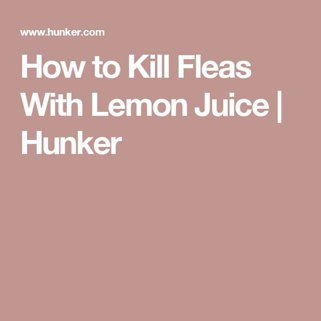 How to Kill Fleas With Lemon Juice | Hunker