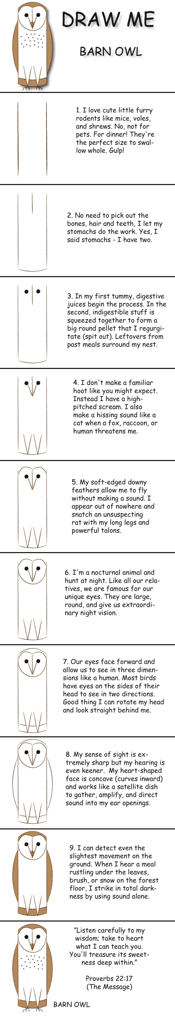 Draw A Barn Owl In 10 Easy Steps And Learn Fun Facts About Its Life