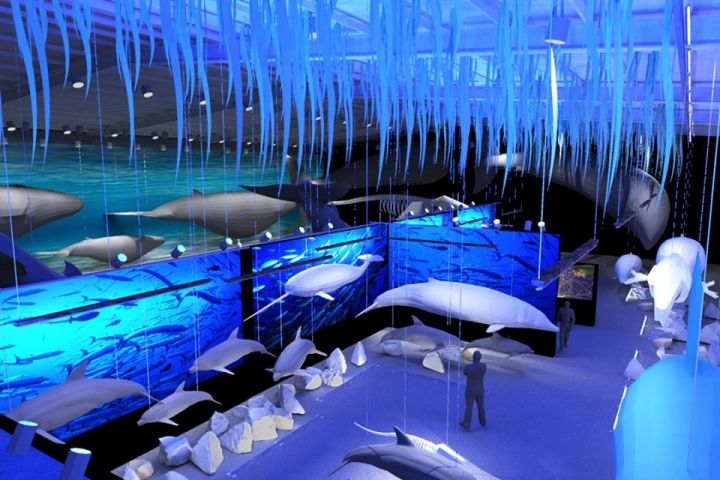 Europe's Largest Whale Museum to Open in Reykjavík | Iceland Review