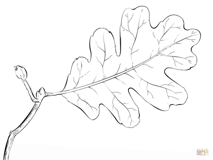 21 best leaf templates images on