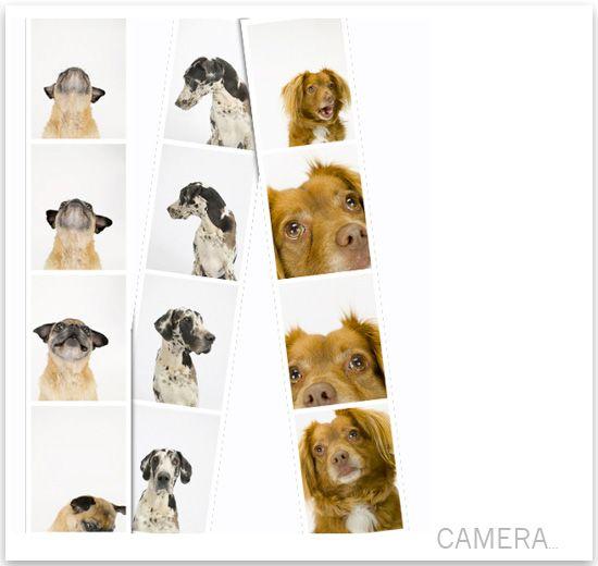 fun photo booth strips: Photos Booths, Photos Ideas, Dog Photos, Fantabul Photos, Fun Photos, Photo Booths, Dogs Photos, Wildlife Photographers
