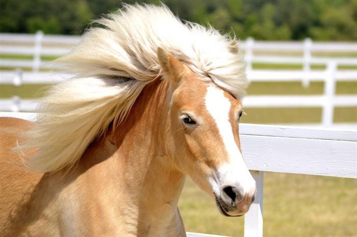 Estes cavalos têm uma crina mais bonita que o meu cabelo...